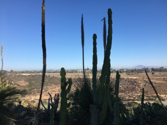 Few cacti in the coastal desert landscape of San Diego
