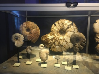 Some ancient, giant Nautiloids at the SD Natural History Museum