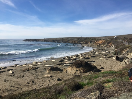 All of the Elephant Seals!!